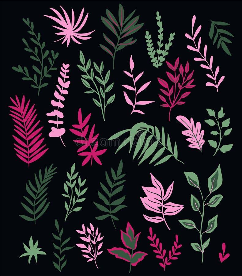 Vektorillustration med uppsättningen av tropiska växter och palmblad som isoleras på mörkret royaltyfri illustrationer