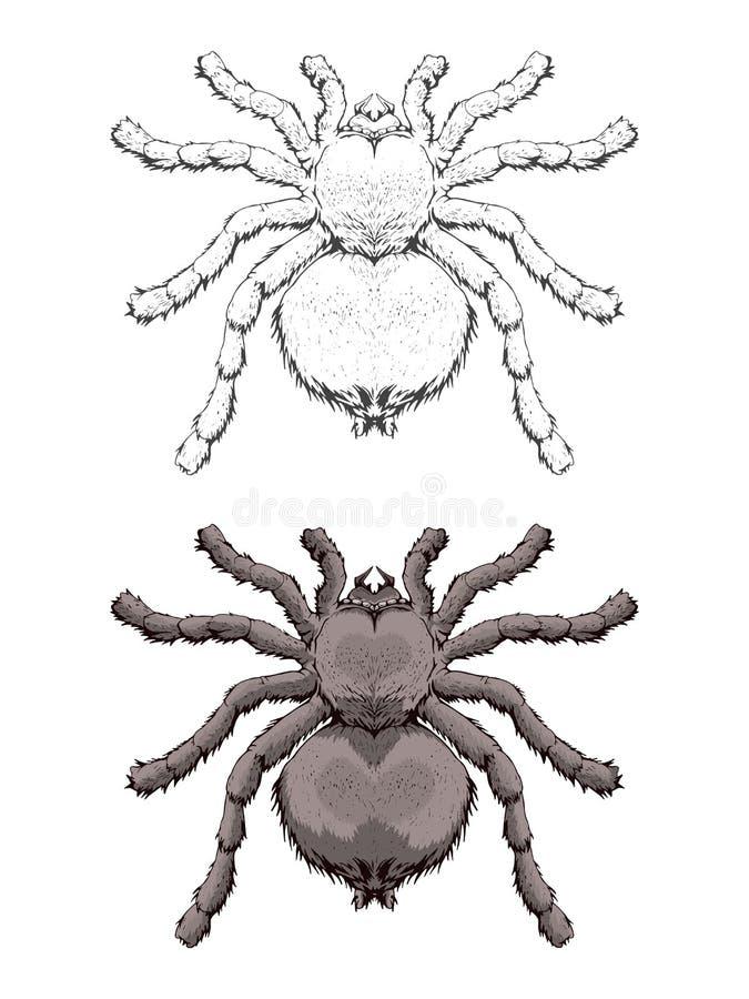 Vektorillustration mit Hand gezeichneter Spinne Zwei Varianten von inse vektor abbildung