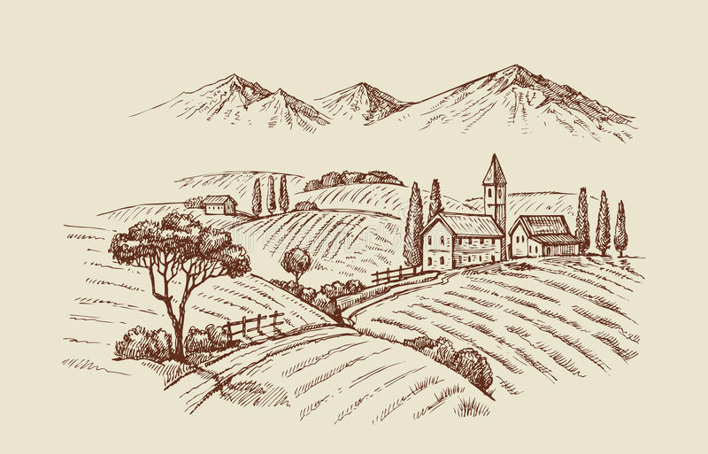 Vektorillustration von wineyard lizenzfreie abbildung