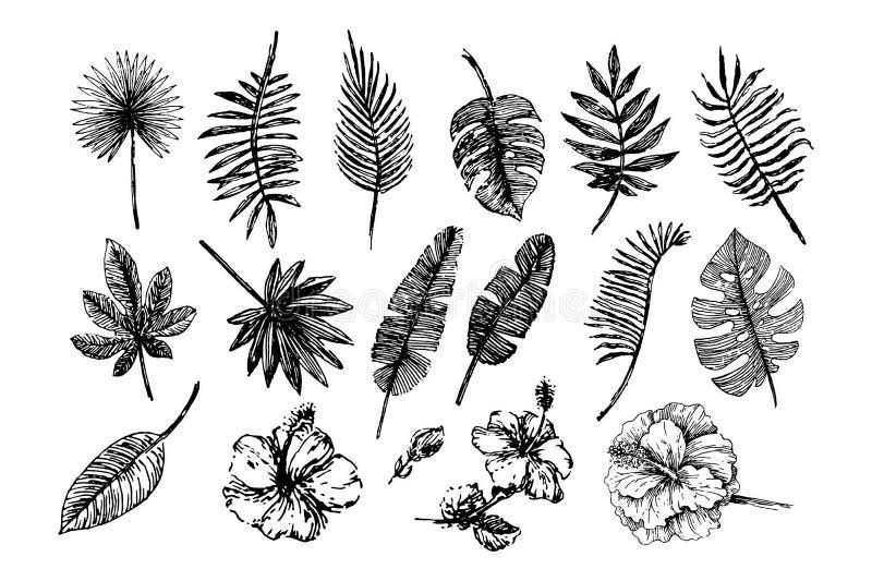 Vektorillustrationbegrepp av tropiska sidor och blommor - uppsättning av isolerade vektorsymboler royaltyfri illustrationer
