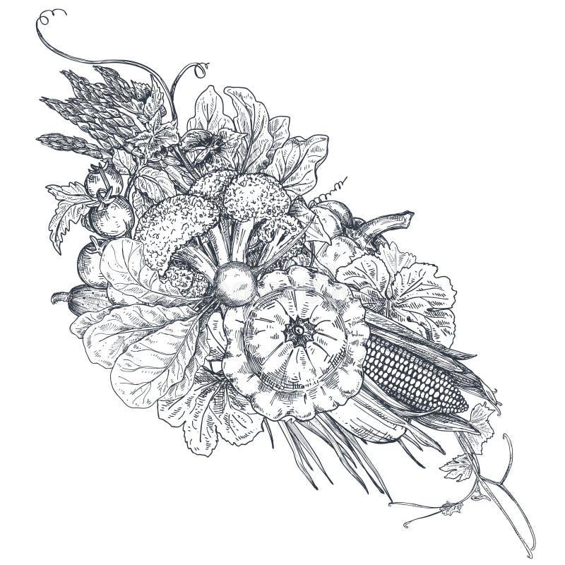 Vektorillustrationen av handen drog vektorlantgårdgrönsaker skissar in stil stock illustrationer