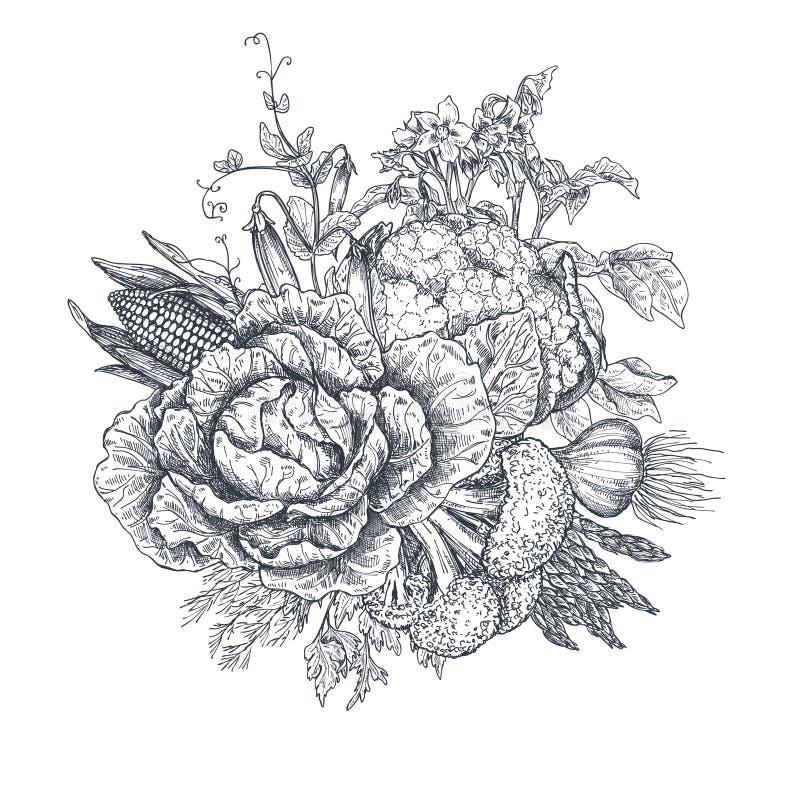 Vektorillustrationen av handen drog vektorlantgårdgrönsaker skissar in stil vektor illustrationer