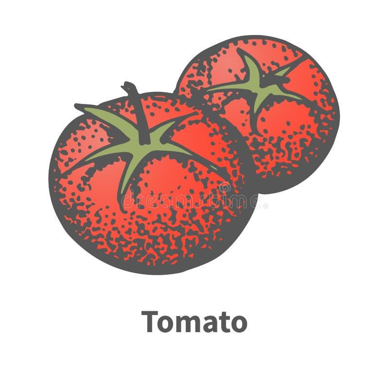 Vektorillustrationen skissar dendrog röda tomaten royaltyfri illustrationer