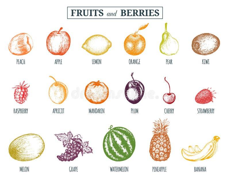 Vektorillustrationfrukter och bär Hand dragen greengroceryuppsättning för organiska drinkkort, etiketter för lantgårdecoprodukter royaltyfri illustrationer