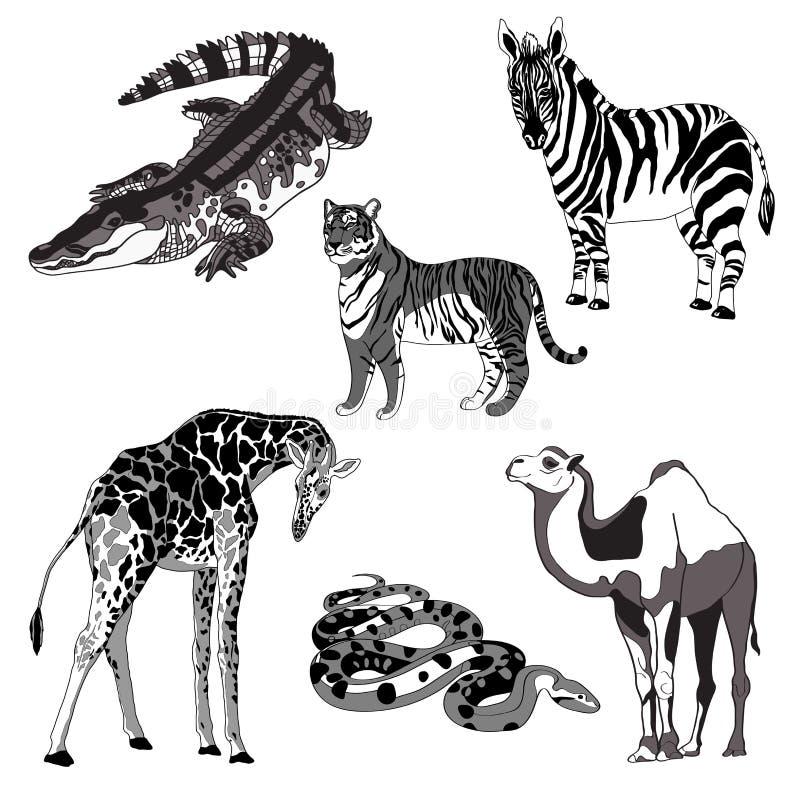 Vektorillustrationgiraff, sebra, krokodil, kamel, orm och tiger svartvitt och grått stock illustrationer