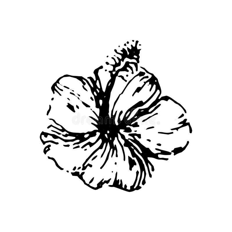 Vektorillustrationskonzept der tropischen Hibiscusblume Schwarzes auf weißem Hintergrund vektor abbildung