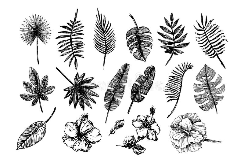Vektorillustrationskonzept von tropischen Blättern und von Blumen Schwarzes auf weißem Hintergrund lizenzfreie abbildung