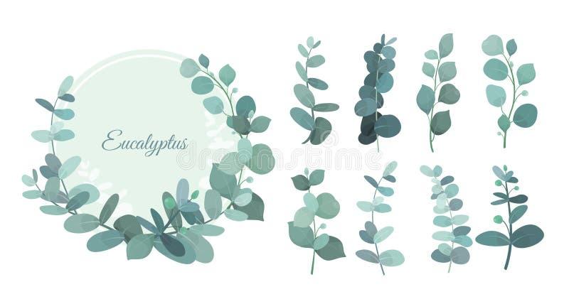 Vektorillustrationssatz Eukalyptusblätter und -niederlassungen Nette Kräuter für Heiratsgrün, dekorative Elemente für lizenzfreie abbildung