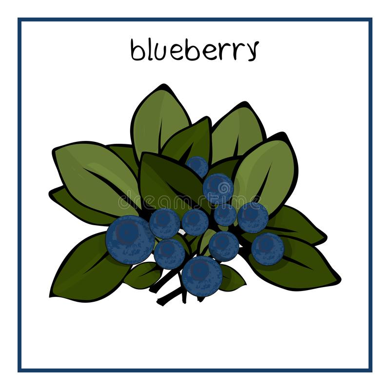 Vektorillustrationsymbol av blåbäret med sidor royaltyfri illustrationer