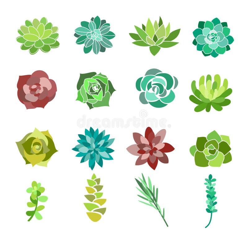 Vektorillustrationuppsättningen av den gröna suckulenten och kaktuns blommar Bästa sikt för ökenväxter som isoleras på vit bakgru stock illustrationer