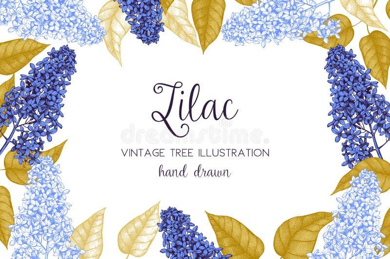 Vektorkarten- oder -einladungsentwurf mit Handgezogener Blumenskizze Blühende lila Baumillustration Weinlesefrühjahrhintergrund stock abbildung