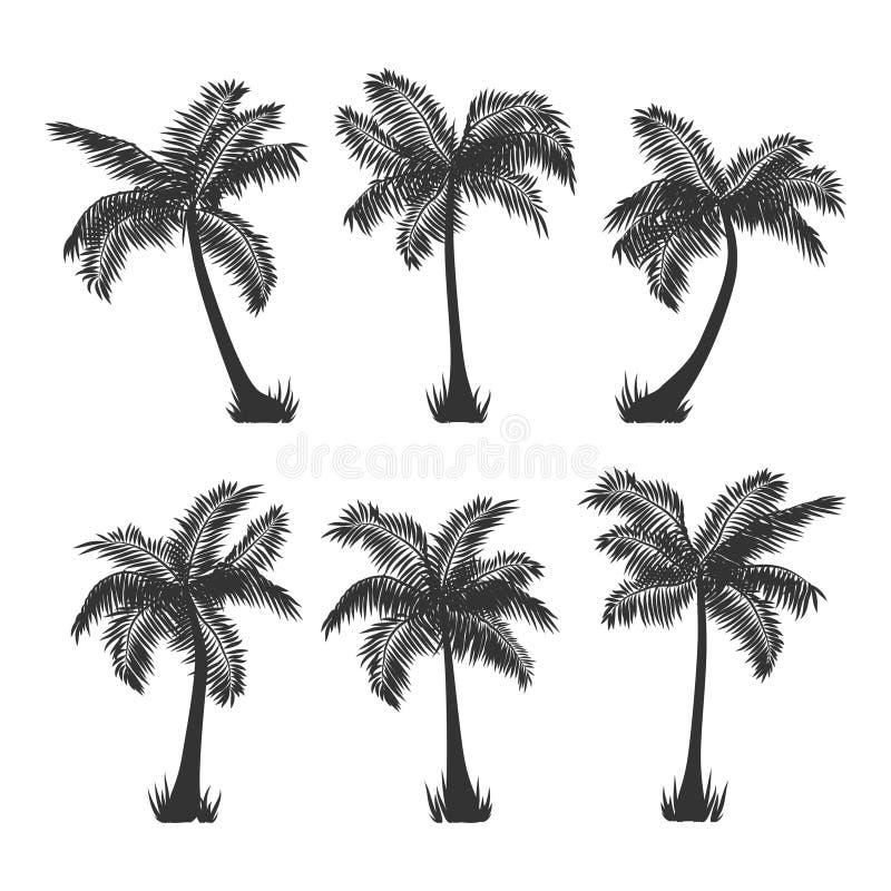 Vektorkokosnuss-Palmeschattenbild stellte auf Weiß ein lizenzfreie abbildung