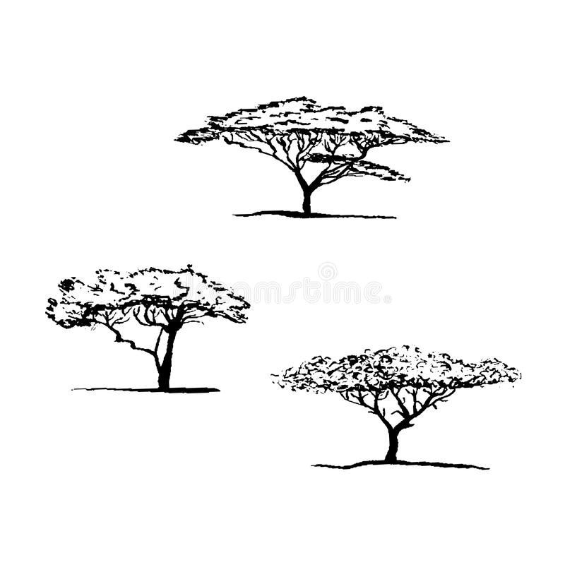 Vektorkontur av akaciaträdet afrikansk tree stock illustrationer