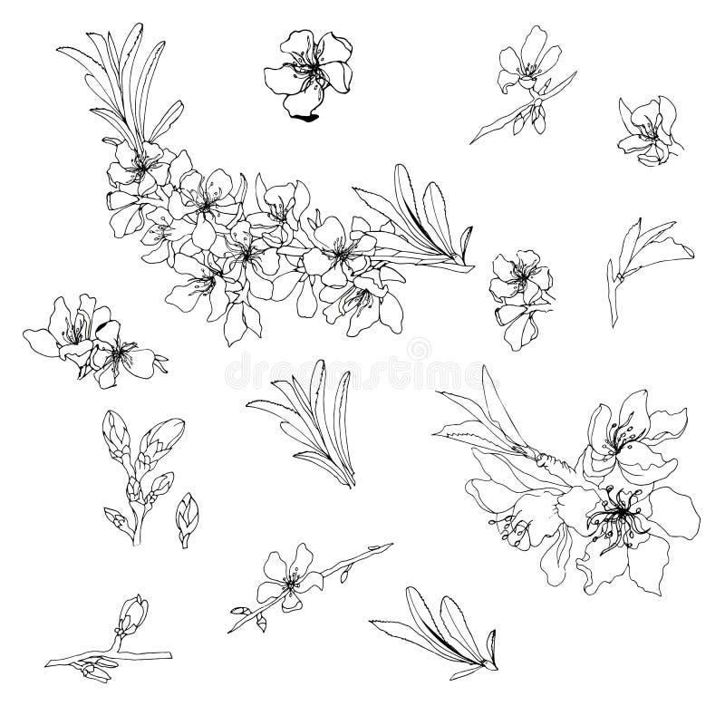 Vektorkontur av blommor och mandelfilialer Översiktsteckning stock illustrationer