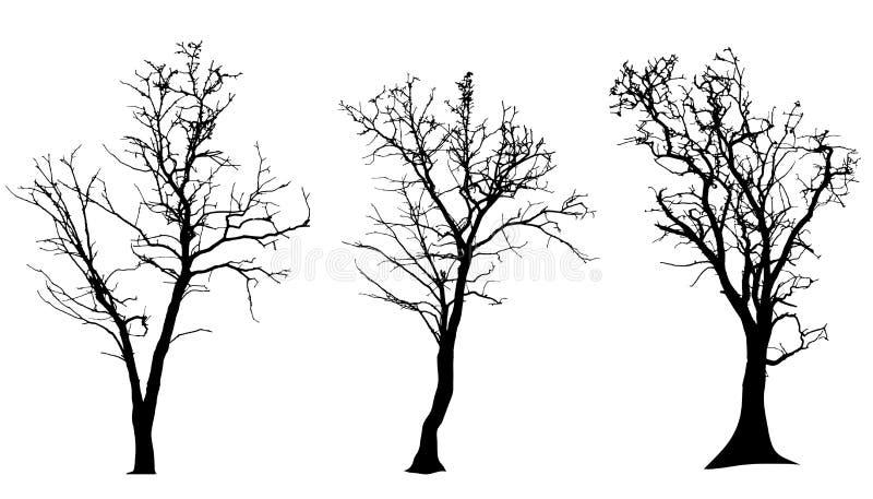 Vektorkontur av trädet royaltyfri illustrationer