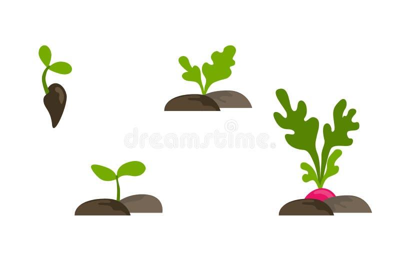 Vektorlägenhetuppsättning av objekt med fasväxttillväxt vektor illustrationer