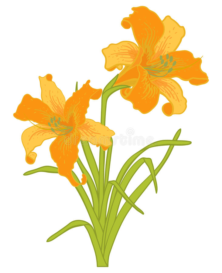 Vektorlilien. stock abbildung