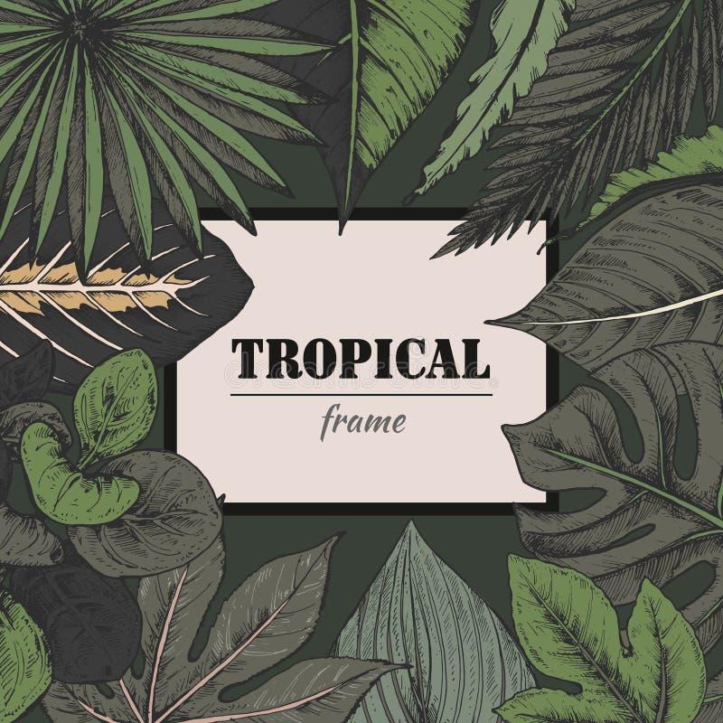 Vektormall med ramen av hand drog tropiska växter royaltyfri illustrationer