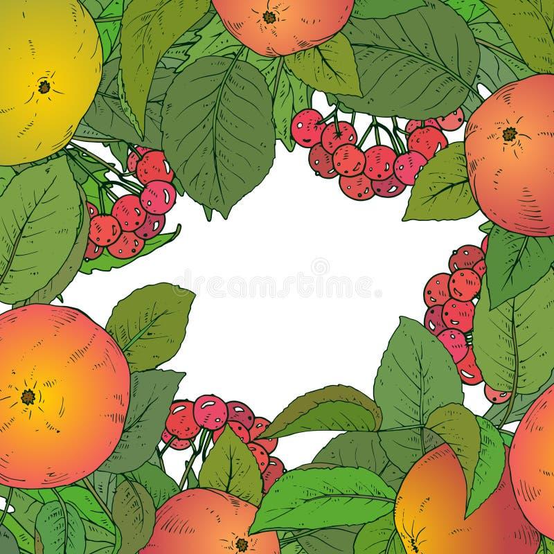 Vektormallen med handen drog äpplet förgrena sig, och guelder steg stock illustrationer