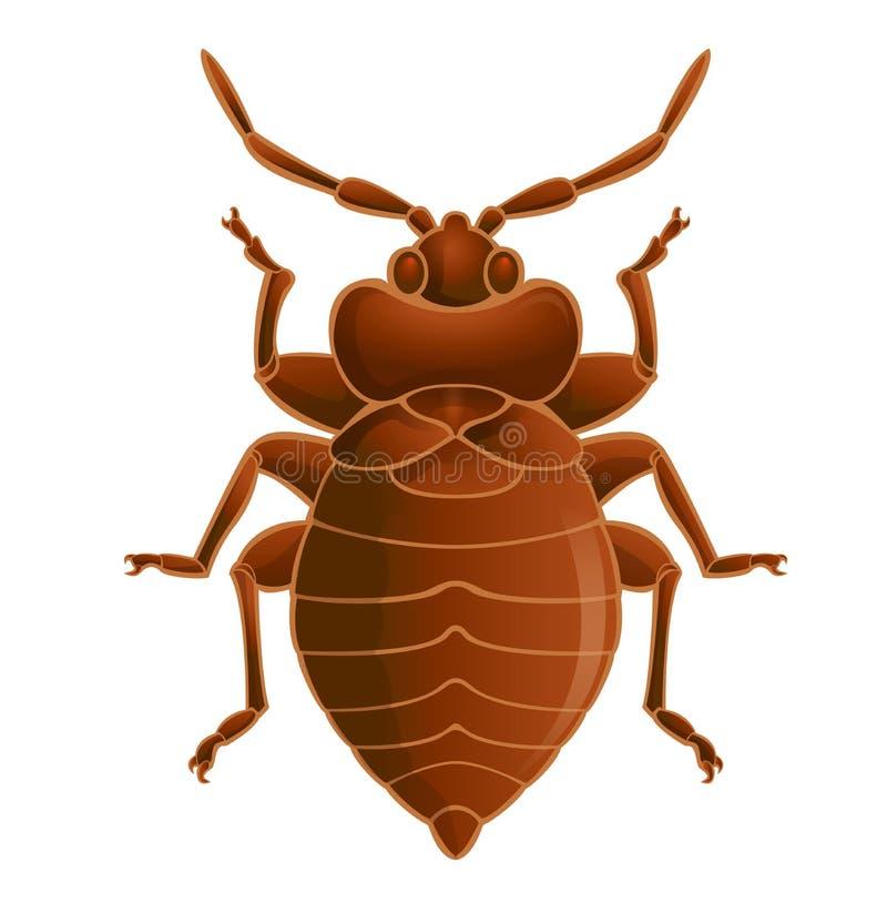 Bedbug royaltyfri illustrationer