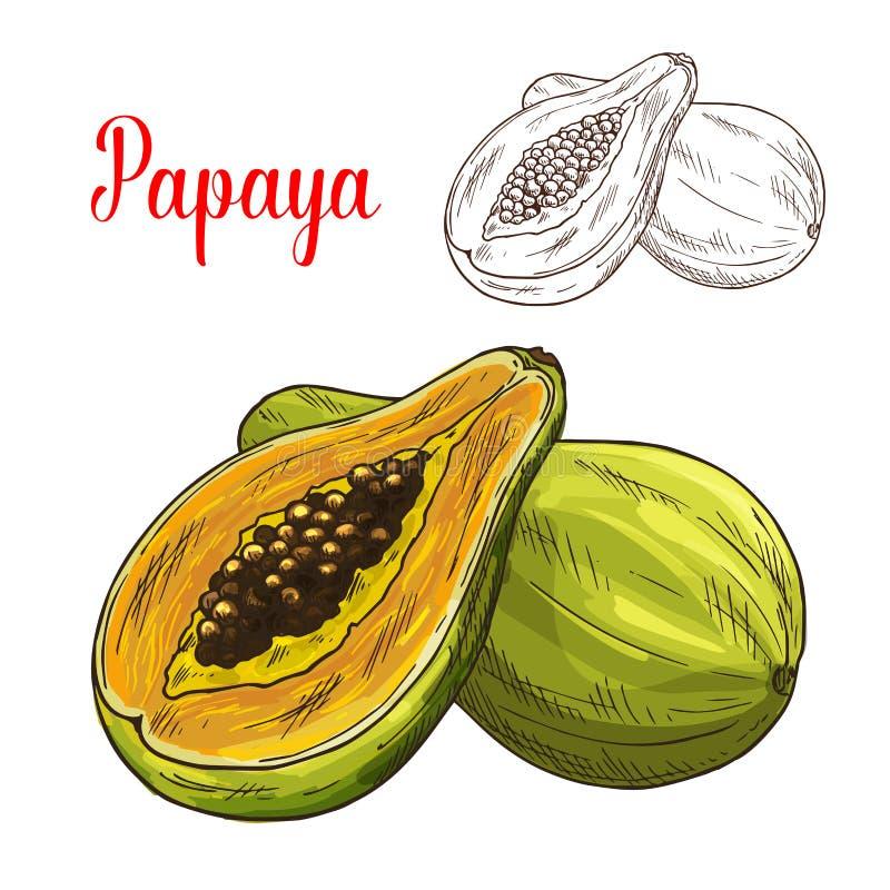 Vektorn för tropisk frukt för papayaen skissar den exotiska symbolen stock illustrationer