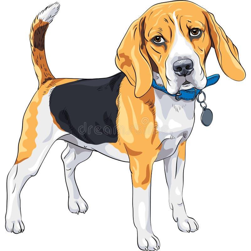 Vektorn skissar allvarligt förföljer Beagleaveln stock illustrationer