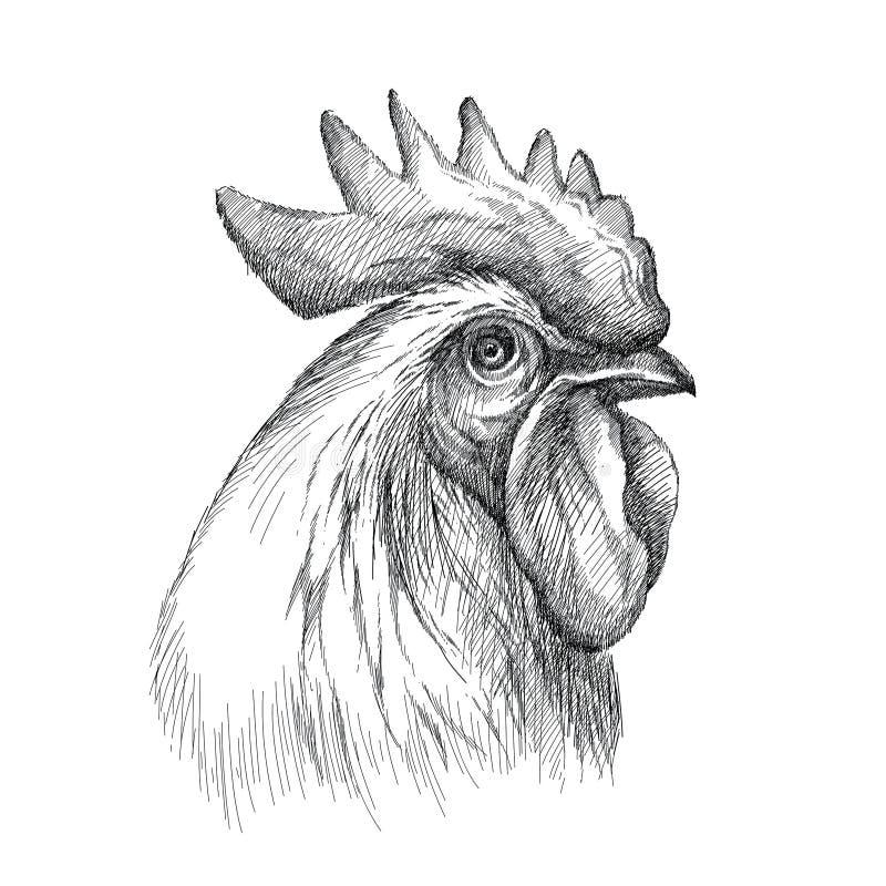 Vektorn skissar av tupp- eller hanehuvudprofil i svart som isoleras på vit bakgrund Kontur av hanehuvudet i grafisk stil stock illustrationer