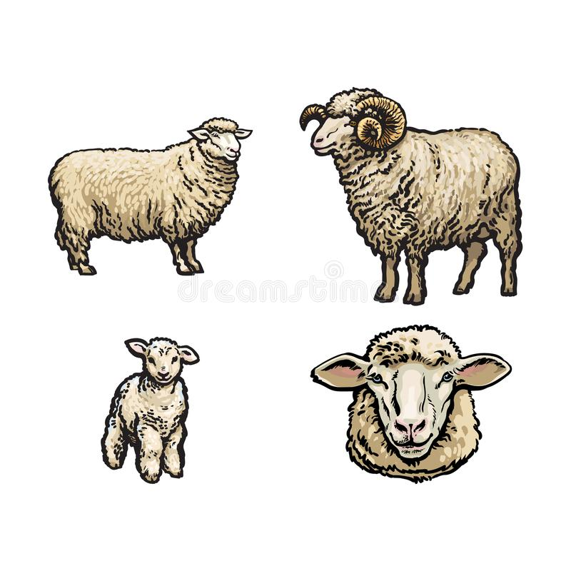 Vektorn skissar får, horned RAMuppsättning för lamm stock illustrationer
