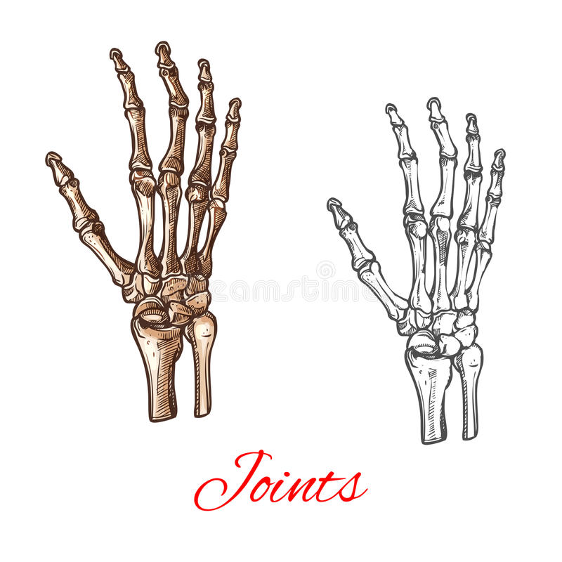 Vektorn skissar symbolen av mänskliga handben eller skarvar stock illustrationer