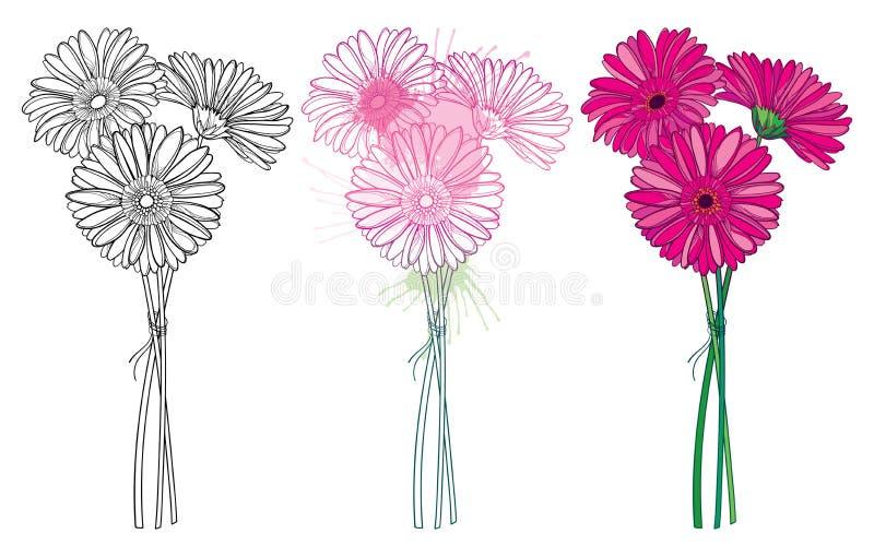Vektorn ställde in av bukett med den gerbera- eller Gerber för översikt tre blomman i pastellfärgat rosa och svart som isolerades royaltyfri illustrationer