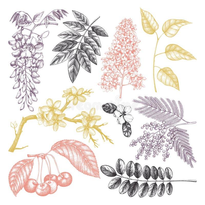 Vektorn ställde in av den drog handen blomstra trädillustrationen för 8 tilläggsdesignelement för eps för format för fjäder vekto royaltyfri illustrationer