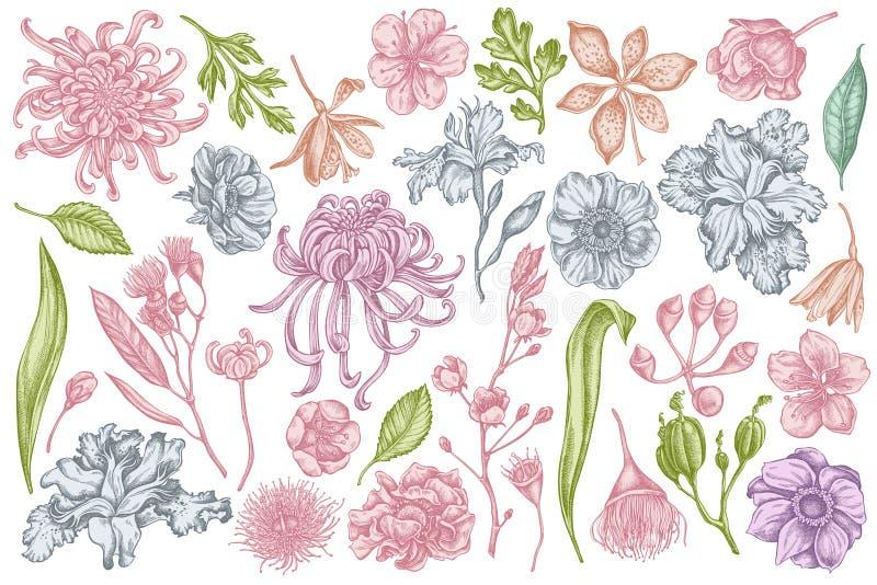 Vektorn ställde in av den utdragna pastellfärgade japanska krysantemumet för handen, björnbärliljan, eukalyptusblomman, anemonen, stock illustrationer