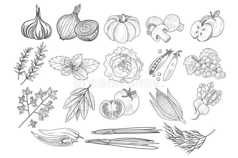 Vektorn ställde in av frukter, grönsaker, och örter skissar in stil Lök pumpa, champinjoner, äpple, kål, ärtor, havre royaltyfri illustrationer