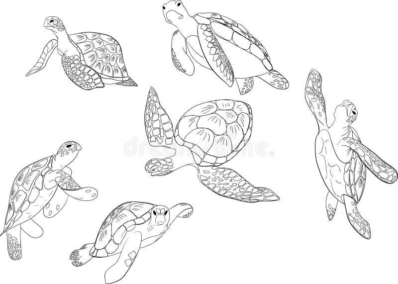 Vektorn ställde in av isolerad bakgrund för havssköldpadda royaltyfri illustrationer