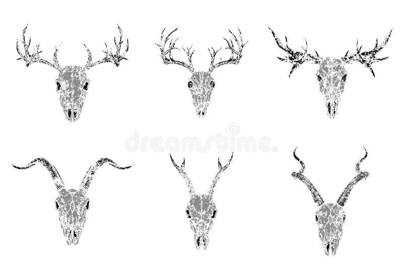 Vektorn ställde in av konturskallar av horned djur: antilop, hjortar och get på vit bakgrund Grunge utformar monokromen avbildar royaltyfri illustrationer