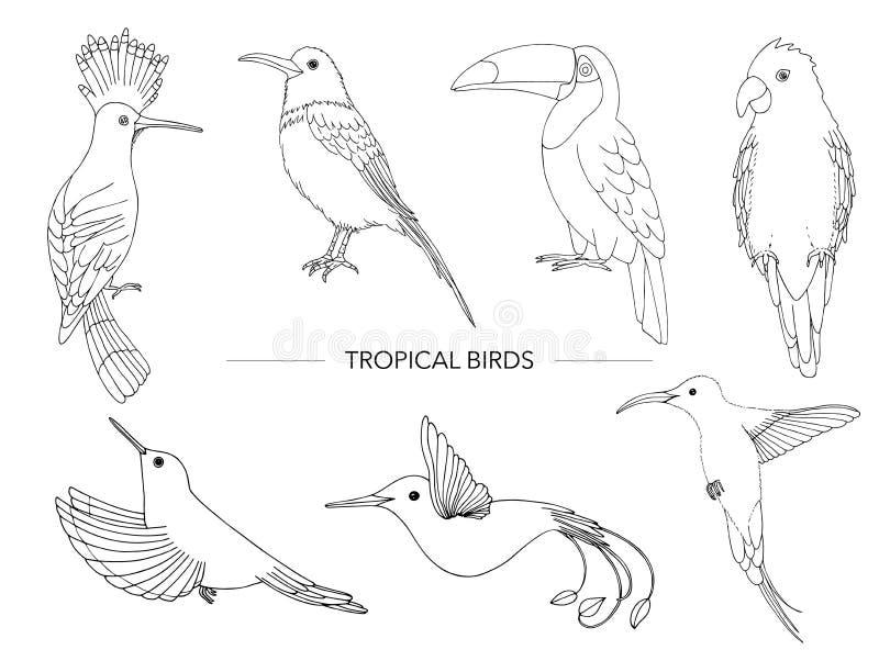 Vektorn ställde in av tropiska fåglar royaltyfri illustrationer