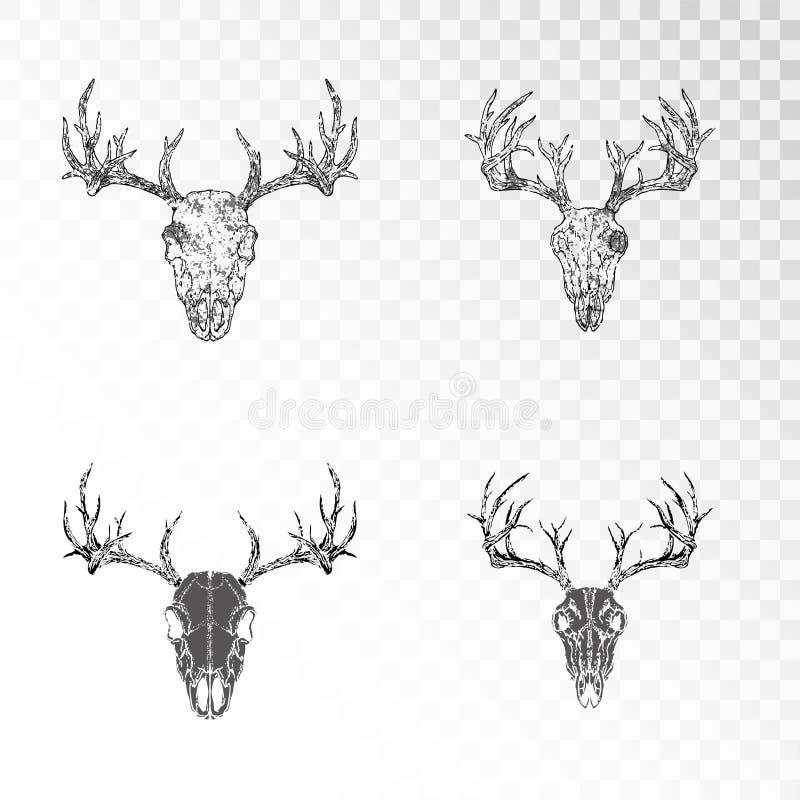 Vektorn ställde in av utdragna skallar för handen av hjortar på genomskinlig bakgrund Svarta konturer och kontur med grungetextur stock illustrationer