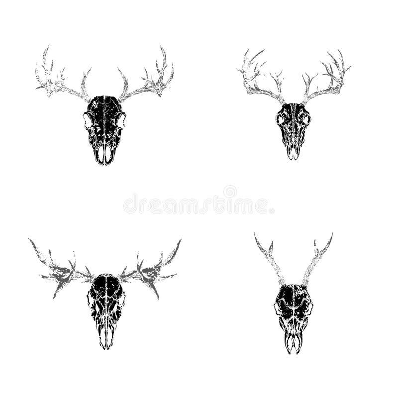 Vektorn ställde in av utdragna skallar för handen av horned djur: hjortar, fullvuxen hankronhjort och älg på vit bakgrund stock illustrationer