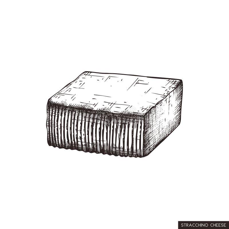 Vektorn Stracchino skissar Mjölkar utdragna italienska kor för hand ostillustrationen Traditionell matteckning för tappning på vi stock illustrationer
