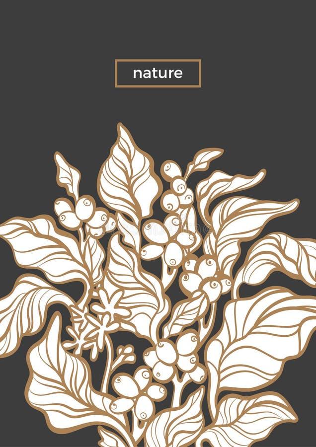 Vektornaturschablone Botanische Kunstlinie Entwurf Kaffeebohne auf braunem Hintergrund vektor abbildung