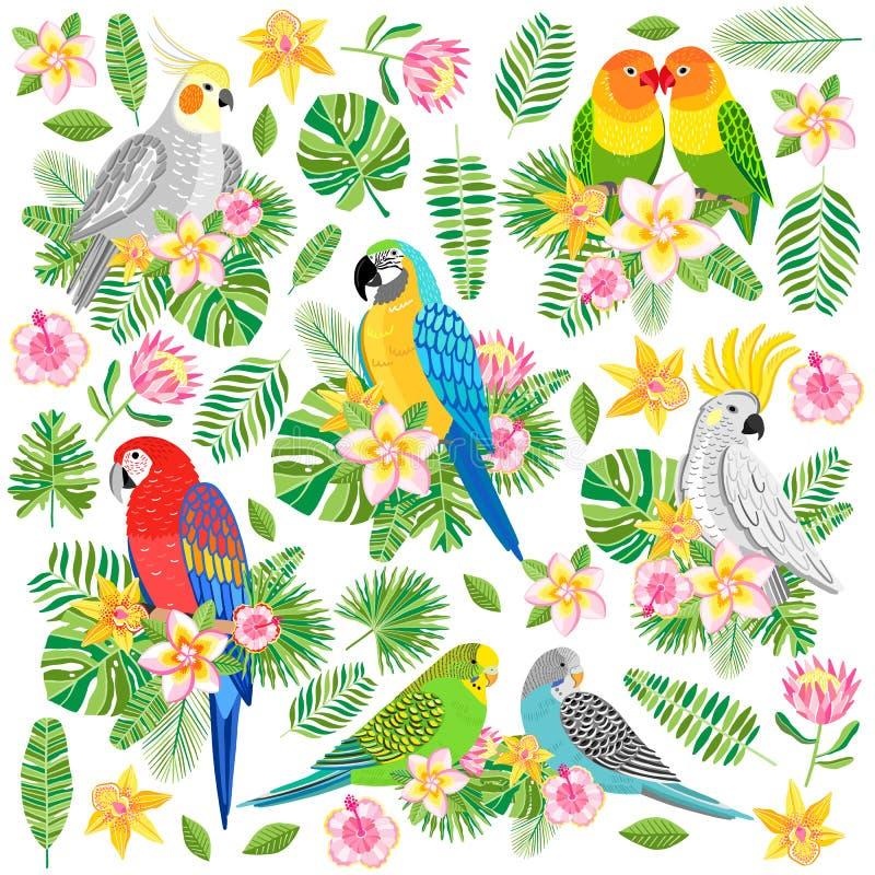 Vektorpapegojaillustration Isolerad tropisk fågel stock illustrationer