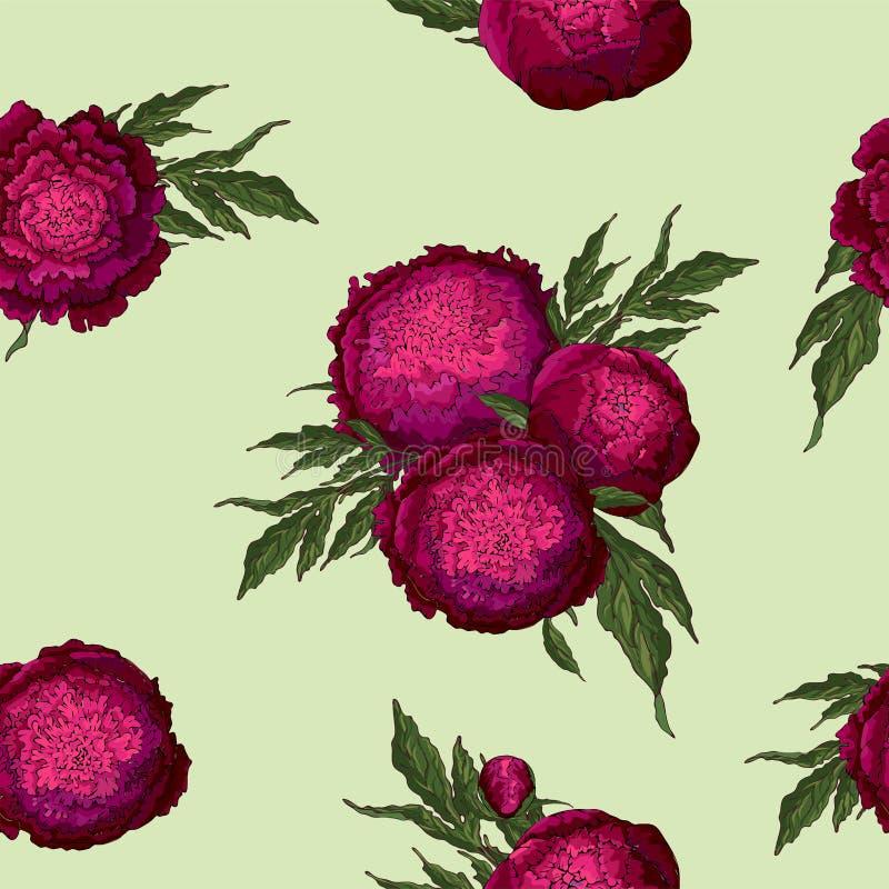 Vektorpfingstrosen Nahtloses Muster von Burgunder-Blumen Blumensträuße von Blumen auf einem hellgrünen Hintergrund Schablone für  stock abbildung
