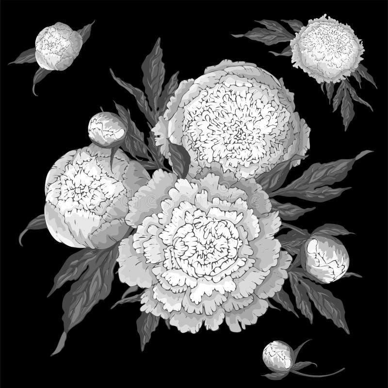 Vektorpioner Ställ in av isolerade monokromma vita blommor Buketter av blommor på en svart bakgrund Mall för blom- stock illustrationer