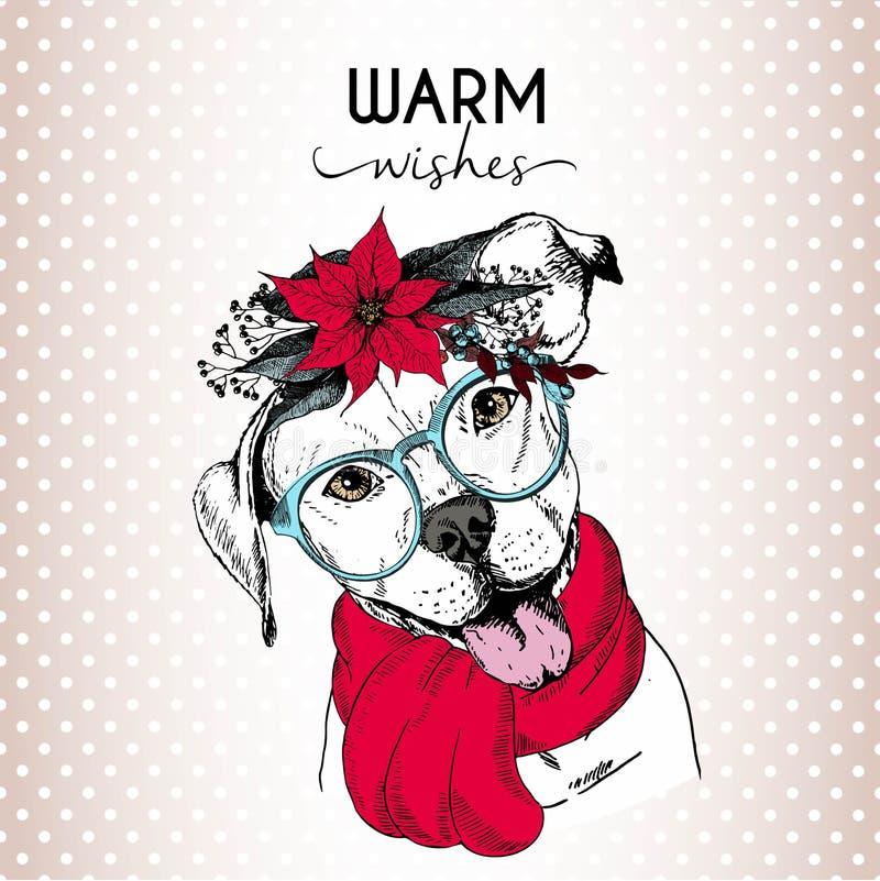 Vektorporträt des Weihnachtshundes Englischer pitbull Hundetragender Poinsettiakranz, -Sonnenbrille und -schal stock abbildung