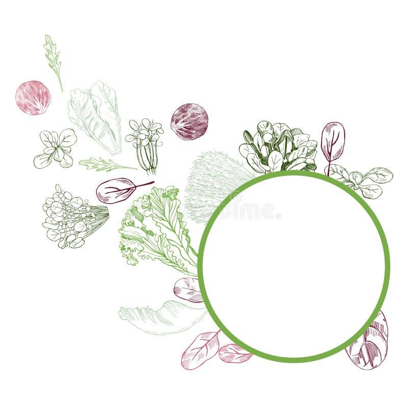 Vektorram med hand drog olika sorter av grönsallat på vit stock illustrationer
