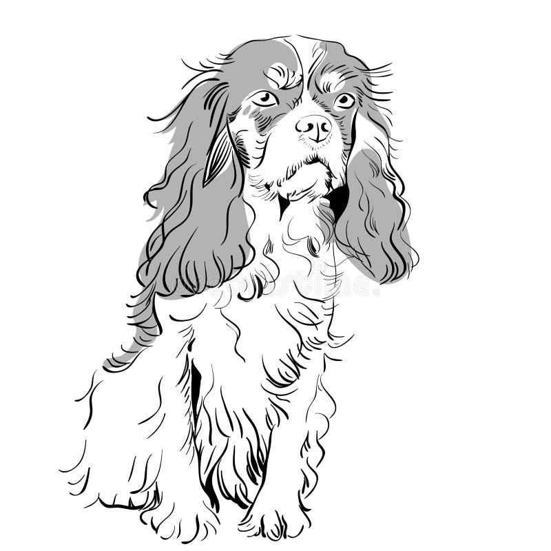 vektorreinrassiger Hundunbekümmerter Königcharles Spaniel vektor abbildung
