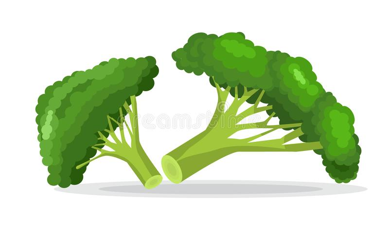 Vektorsamling av färgrik broccoli Illustrerad stil för plan och fast färg stock illustrationer