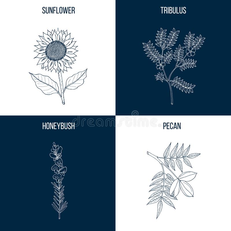 Vektorsamling av fyra hand drog medicinalväxter royaltyfri illustrationer