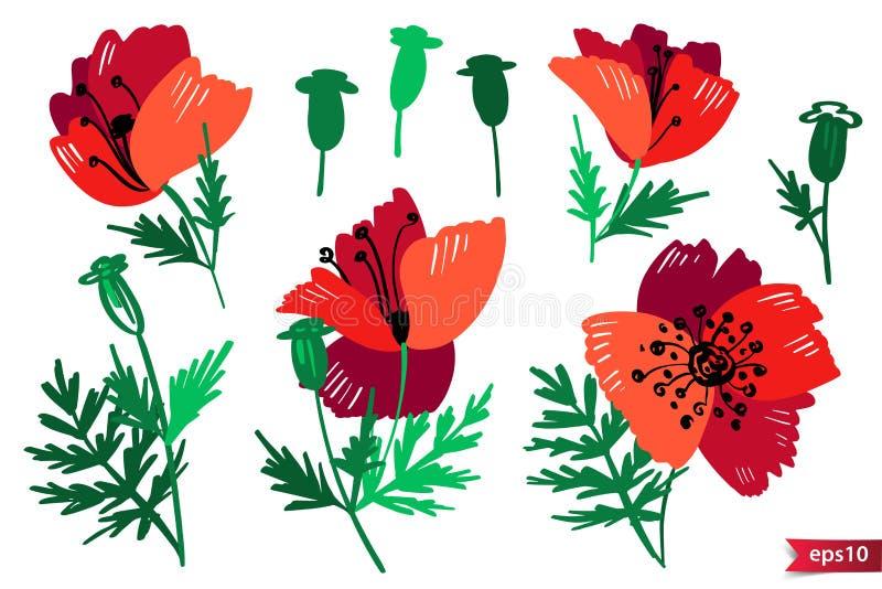 Vektorsamling av hand drog v?xter Botanisk uppsättning av färgrika klotterstilblommor, sidor och filialer Röd poppi stock illustrationer