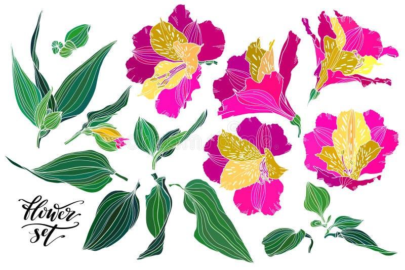 Vektorsamling av hand drog v?xter Botanisk uppsättning av färgrika realistiska blommor, sidor och filialer Alstroemeria stock illustrationer